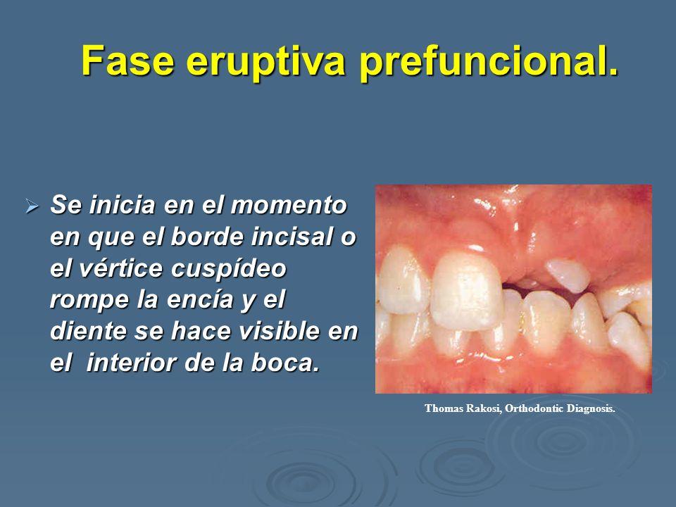 Fase eruptiva prefuncional. Se inicia en el momento en que el borde incisal o el vértice cuspídeo rompe la encía y el diente se hace visible en el int