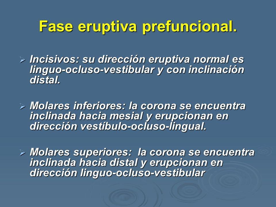Fase eruptiva prefuncional. Incisivos: su dirección eruptiva normal es linguo-ocluso-vestibular y con inclinación distal. Incisivos: su dirección erup