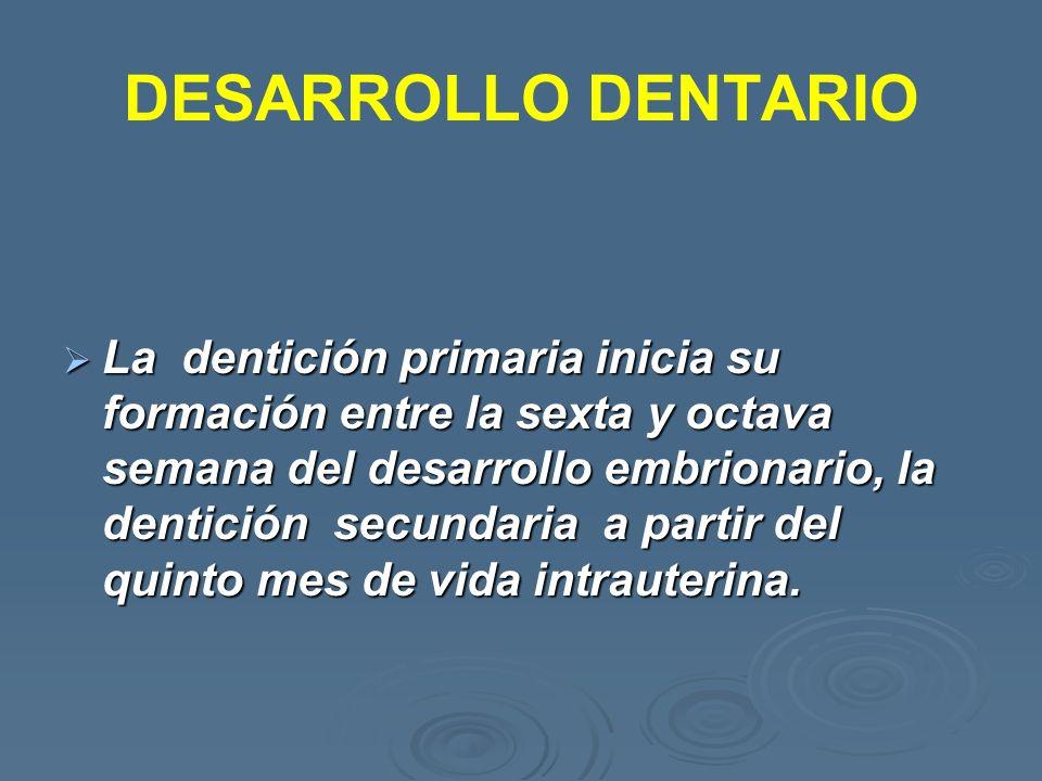 DESARROLLO DENTARIO La dentición primaria inicia su formación entre la sexta y octava semana del desarrollo embrionario, la dentición secundaria a par