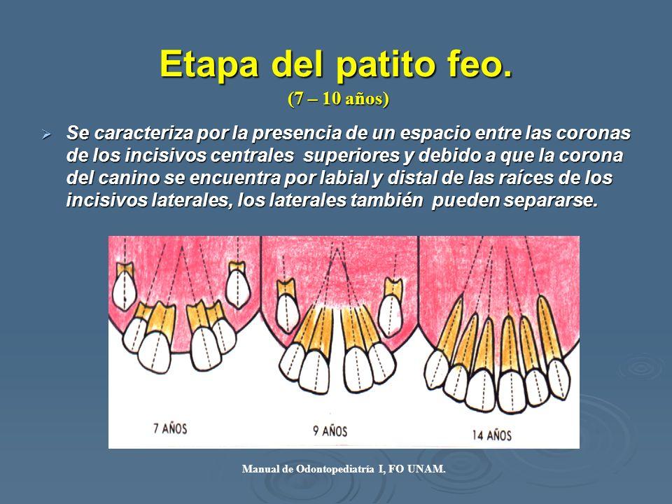 Etapa del patito feo. Se caracteriza por la presencia de un espacio entre las coronas de los incisivos centrales superiores y debido a que la corona d