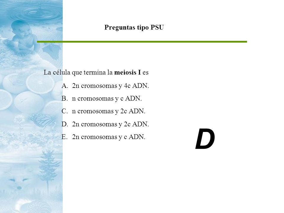 Preguntas tipo PSU La célula que termina la meiosis I es A.2n cromosomas y 4c ADN. B.n cromosomas y c ADN. C.n cromosomas y 2c ADN. D.2n cromosomas y