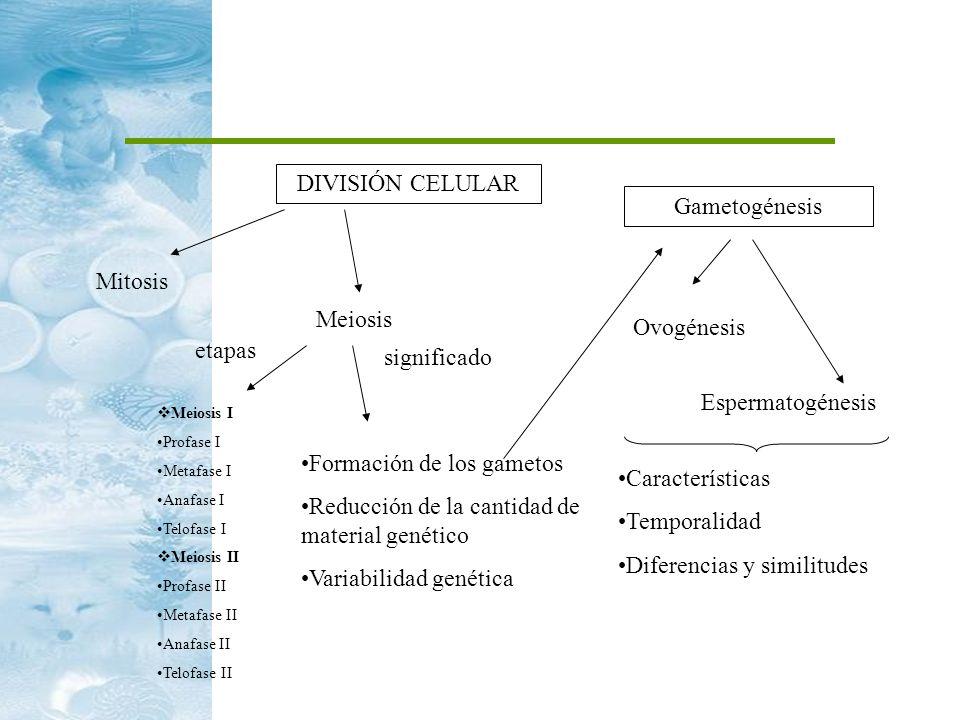 DIVISIÓN CELULAR Mitosis Meiosis etapas Meiosis I Profase I Metafase I Anafase I Telofase I Meiosis II Profase II Metafase II Anafase II Telofase II s