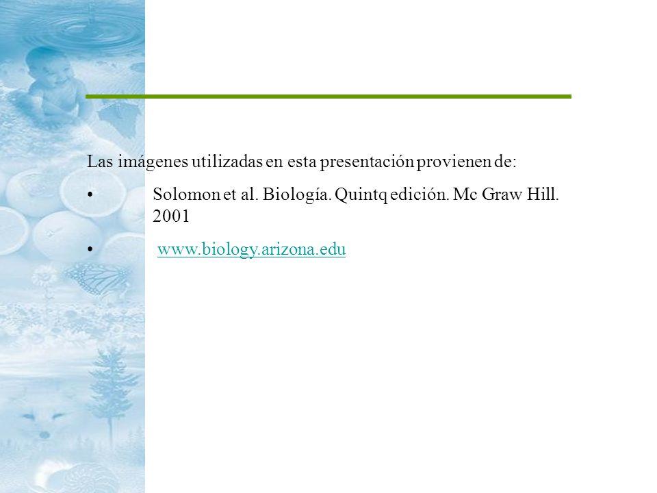 Las imágenes utilizadas en esta presentación provienen de: Solomon et al. Biología. Quintq edición. Mc Graw Hill. 2001 www.biology.arizona.edu