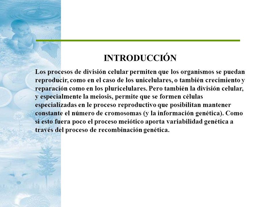 INTRODUCCIÓN Los procesos de división celular permiten que los organismos se puedan reproducir, como en el caso de los unicelulares, o también crecimi