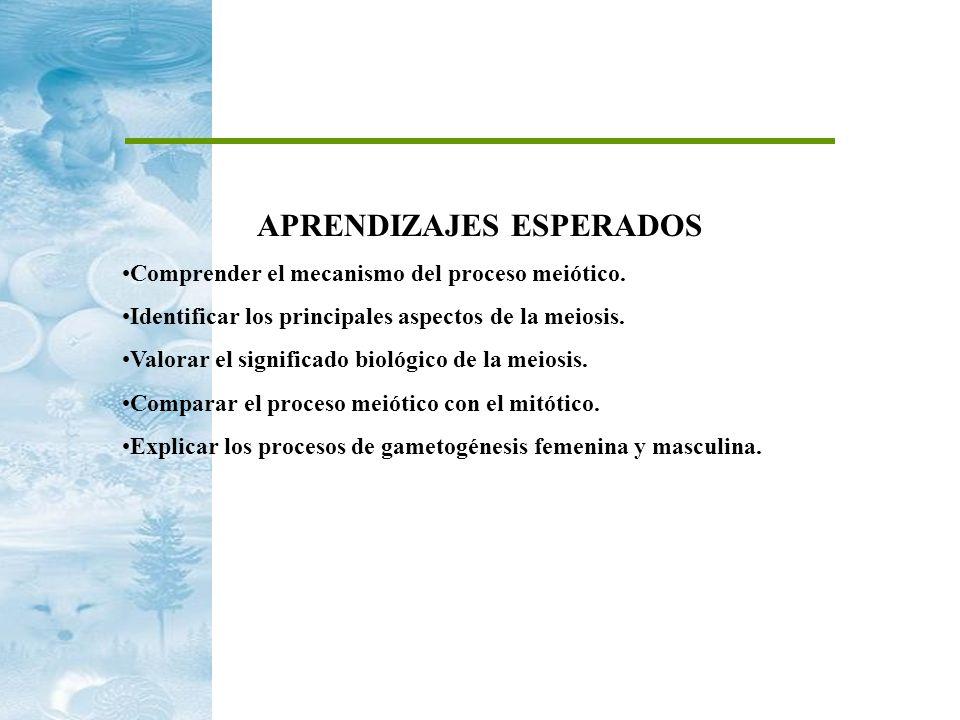 APRENDIZAJES ESPERADOS Comprender el mecanismo del proceso meiótico. Identificar los principales aspectos de la meiosis. Valorar el significado biológ