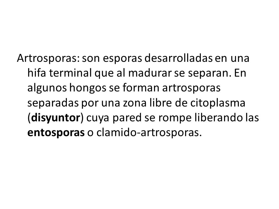 Artrosporas: son esporas desarrolladas en una hifa terminal que al madurar se separan. En algunos hongos se forman artrosporas separadas por una zona
