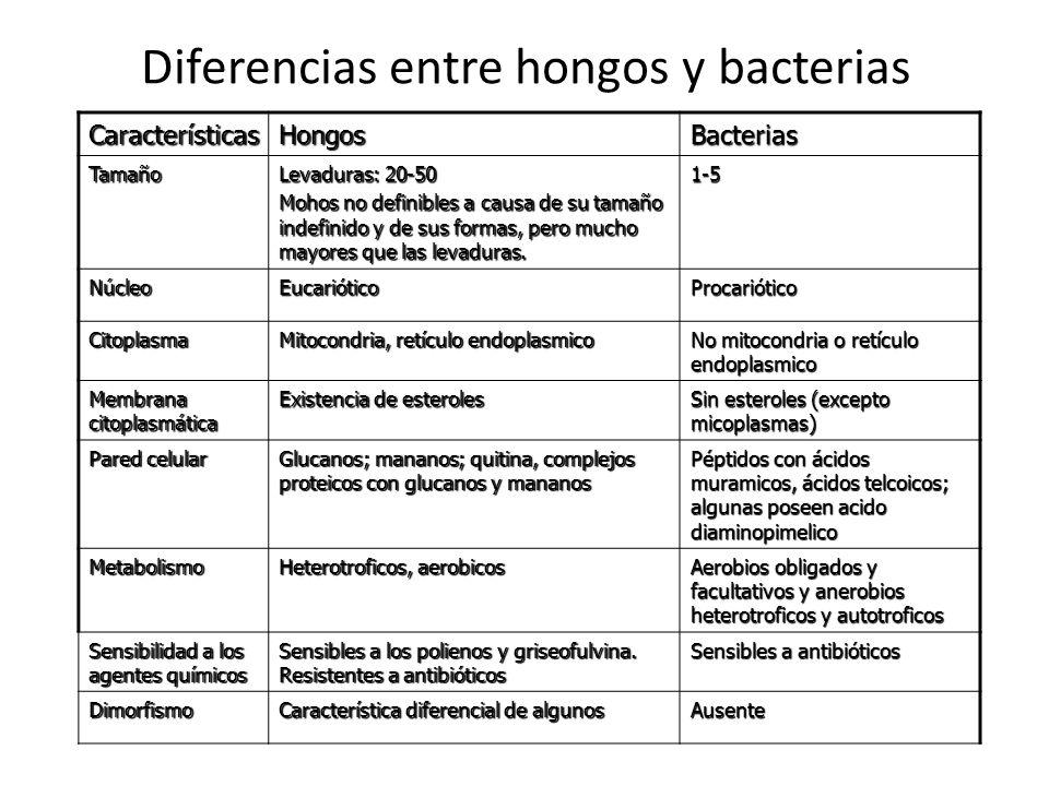 MORFOLOGIA Son microorganismos eucariote, pueden existir en dos formas morfológicas Hongos filamentosos (crecimiento en hifas) Unicelulares (levaduras) Ambas, alternan las dos morfologías anteriores de acuerdo a las condiciones fisiológicas.