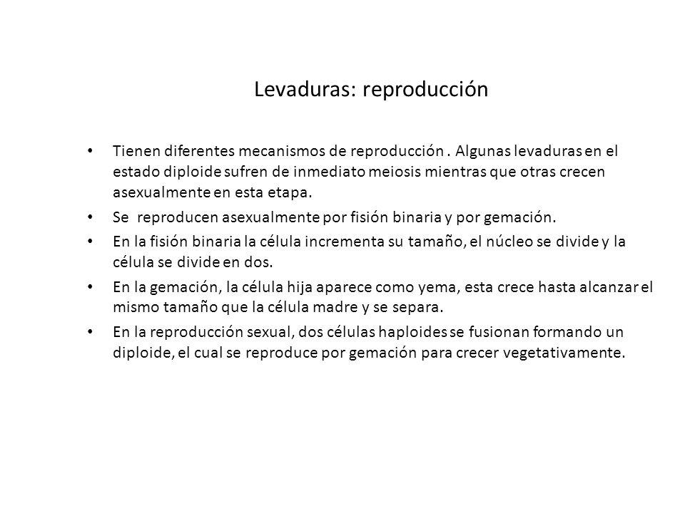 Levaduras: reproducción Tienen diferentes mecanismos de reproducción. Algunas levaduras en el estado diploide sufren de inmediato meiosis mientras que