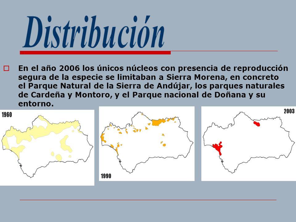 En el año 2006 los únicos núcleos con presencia de reproducción segura de la especie se limitaban a Sierra Morena, en concreto el Parque Natural de la