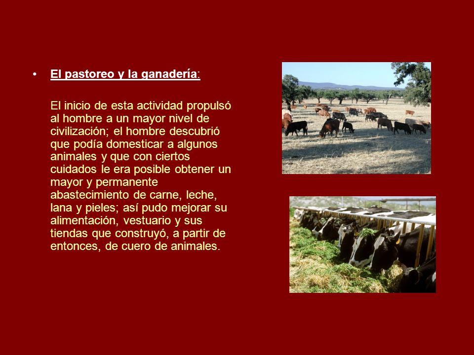 El pastoreo y la ganadería: El inicio de esta actividad propulsó al hombre a un mayor nivel de civilización; el hombre descubrió que podía domesticar