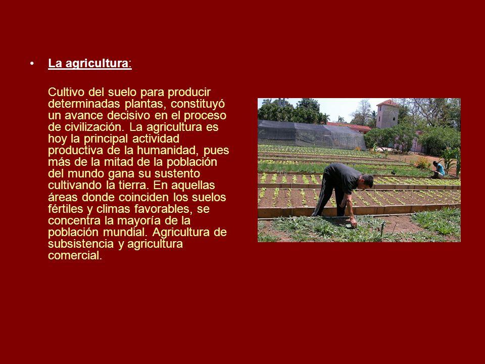 La agricultura: Cultivo del suelo para producir determinadas plantas, constituyó un avance decisivo en el proceso de civilización. La agricultura es h