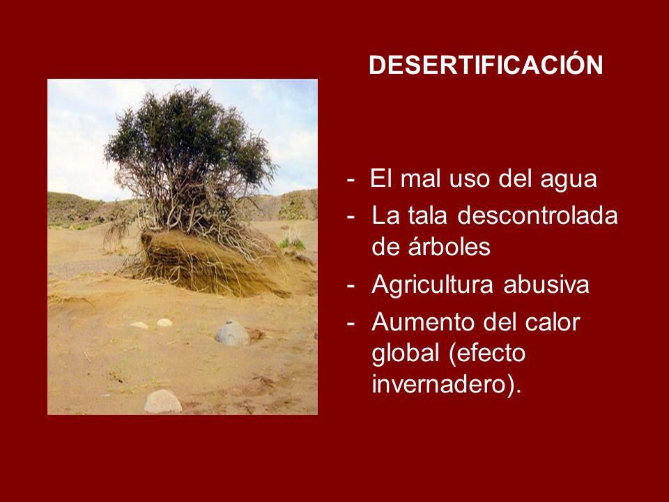 DESERTIFICACIÓN - El mal uso del agua -La tala descontrolada de árboles -Agricultura abusiva -Aumento del calor global (efecto invernadero).