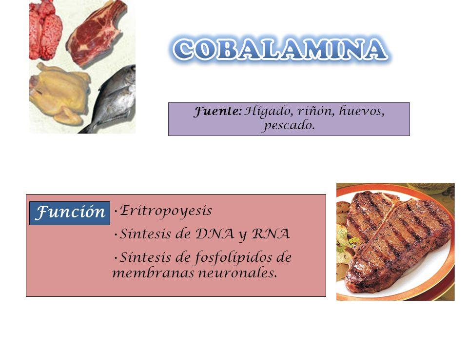 Fuente: Hígado, riñón, huevos, pescado. Función Eritropoyesis Síntesis de DNA y RNA Síntesis de fosfolípidos de membranas neuronales.