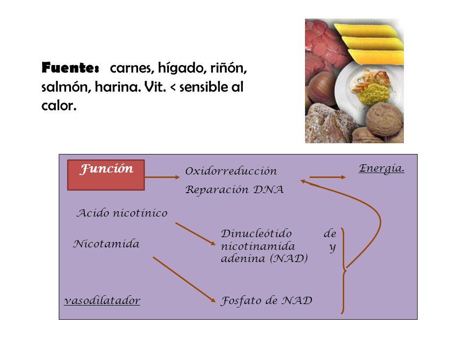 Fuente: carnes, hígado, riñón, salmón, harina. Vit. < sensible al calor. Función Nicotamida Dinucleótido de nicotinamida y adenina (NAD) Fosfato de NA