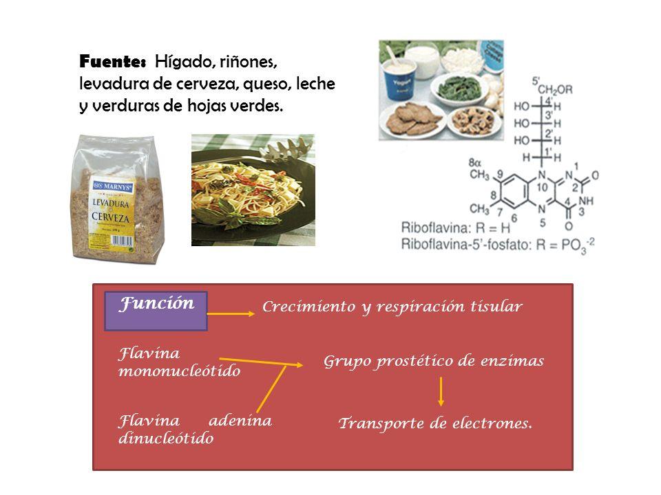 Función Transporte de electrones. Flavina mononucleótido Flavina adenina dinucleótido Grupo prostético de enzimas Crecimiento y respiración tisular Fu