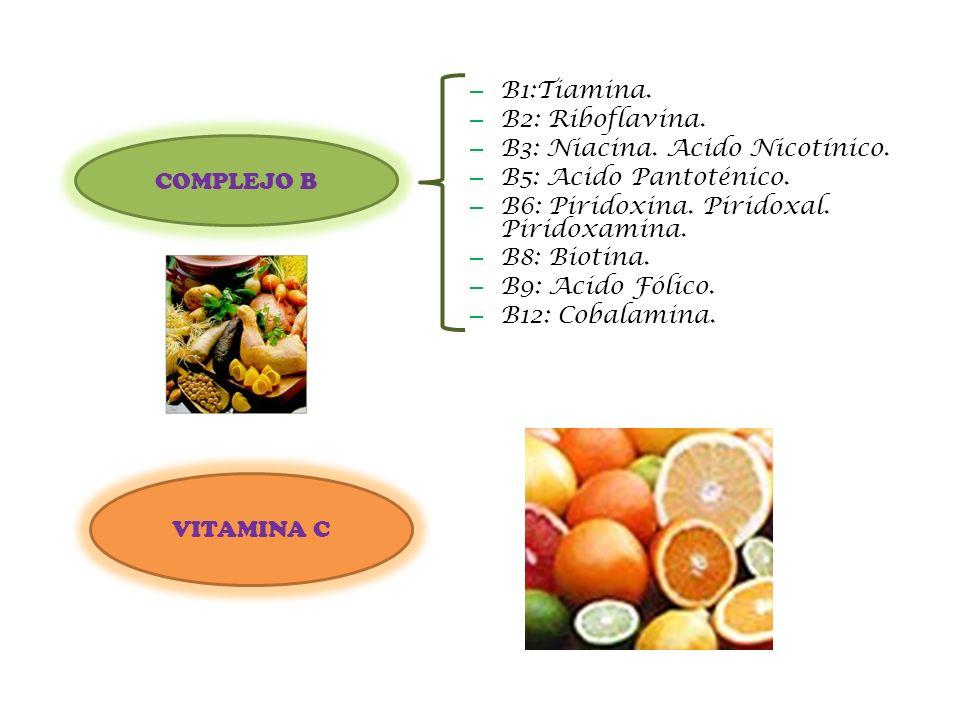 – B1:Tiamina. – B2: Riboflavina. – B3: Niacina. Acido Nicotínico. – B5: Acido Pantoténico. – B6: Piridoxina. Piridoxal. Piridoxamina. – B8: Biotina. –