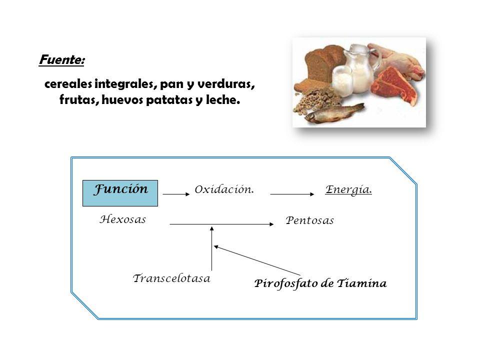 Fuente: cereales integrales, pan y verduras, frutas, huevos patatas y leche. Hexosas Pentosas Pirofosfato de Tiamina Transcelotasa Función Oxidación.E