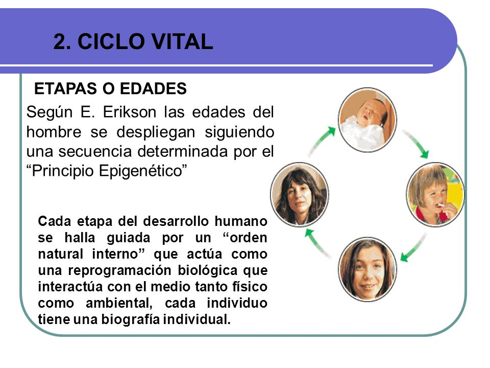 2. CICLO VITAL ETAPAS O EDADES Según E. Erikson las edades del hombre se despliegan siguiendo una secuencia determinada por el Principio Epigenético C