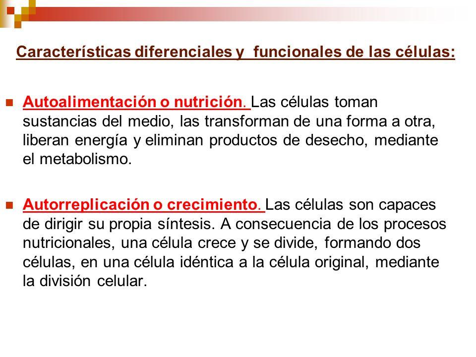 Características diferenciales y funcionales de las células: Autoalimentación o nutrición. Las células toman sustancias del medio, las transforman de u