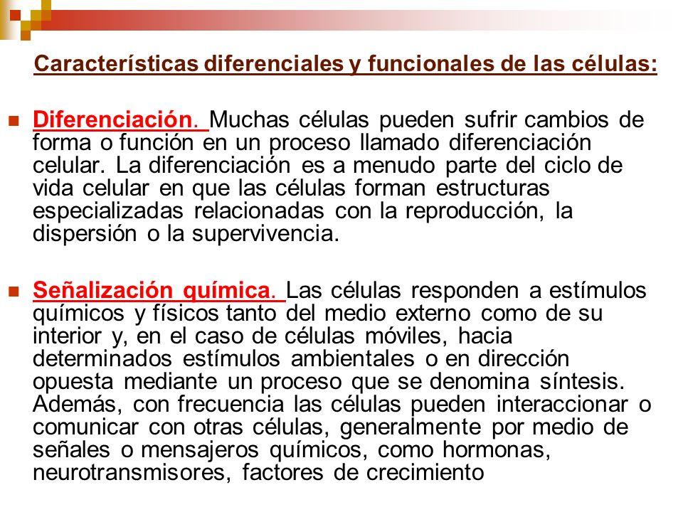 Diferenciación. Muchas células pueden sufrir cambios de forma o función en un proceso llamado diferenciación celular. La diferenciación es a menudo pa