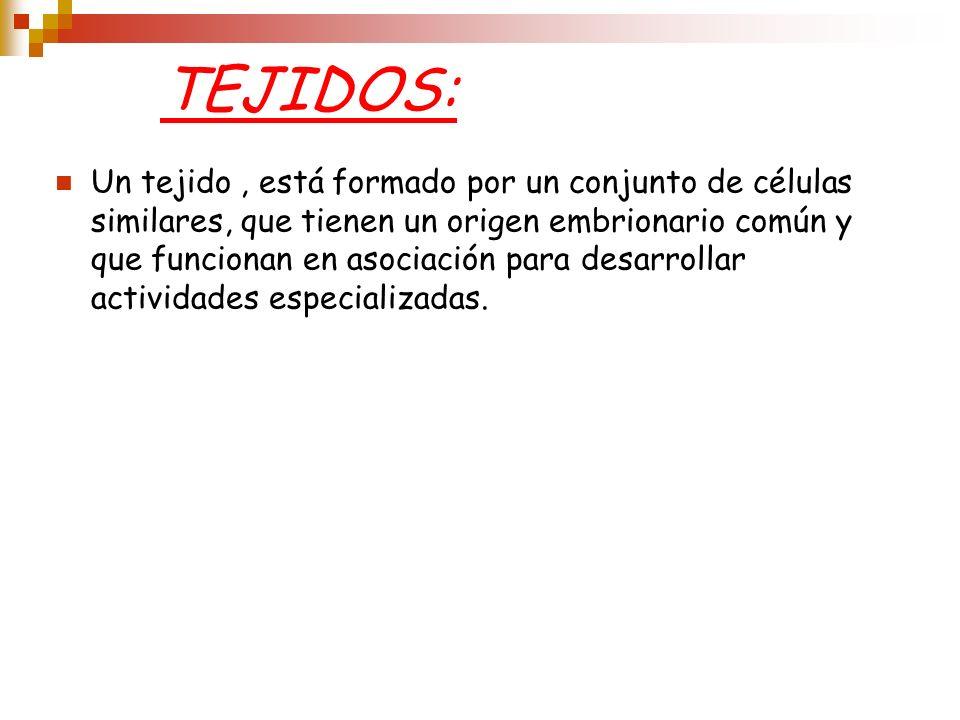 TEJIDOS: Un tejido, está formado por un conjunto de células similares, que tienen un origen embrionario común y que funcionan en asociación para desar