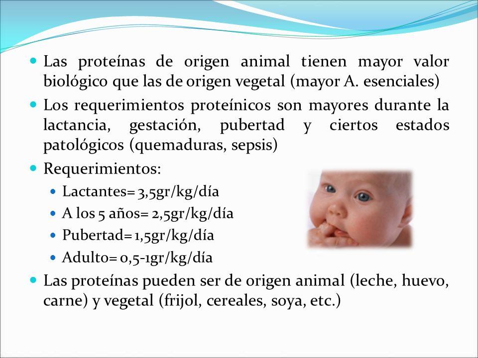 Las proteínas de origen animal tienen mayor valor biológico que las de origen vegetal (mayor A. esenciales) Los requerimientos proteínicos son mayores