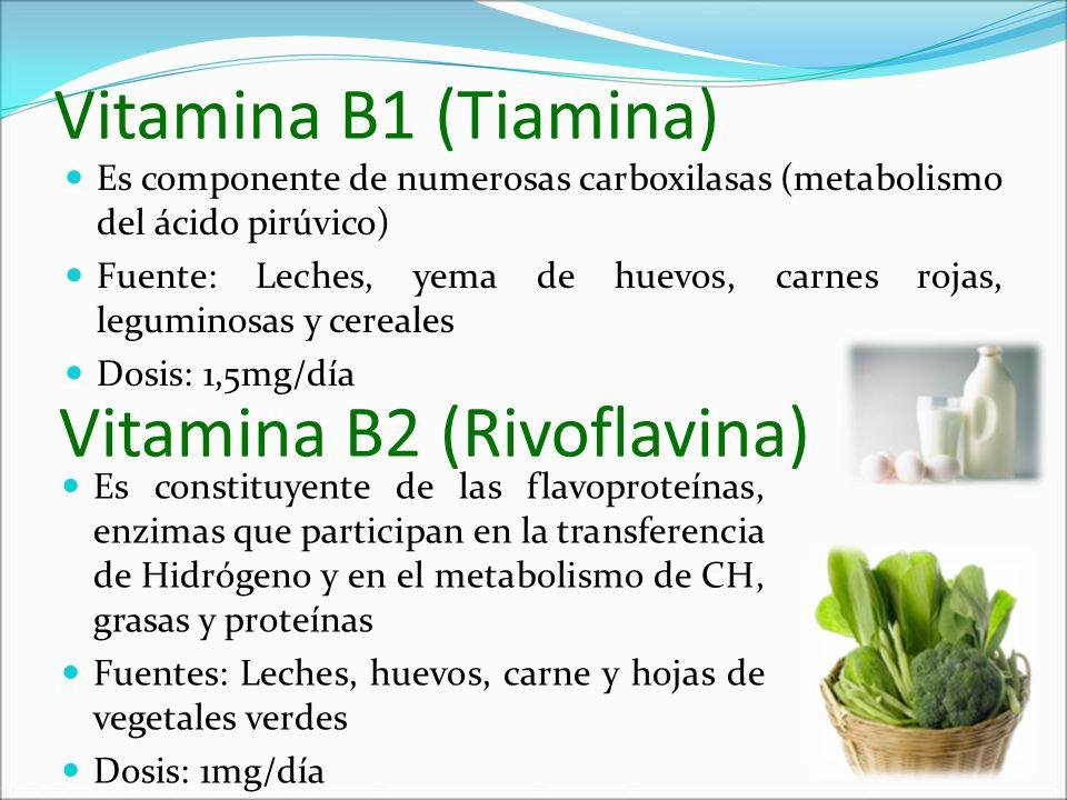 Vitamina B1 (Tiamina) Es componente de numerosas carboxilasas (metabolismo del ácido pirúvico) Fuente: Leches, yema de huevos, carnes rojas, leguminos