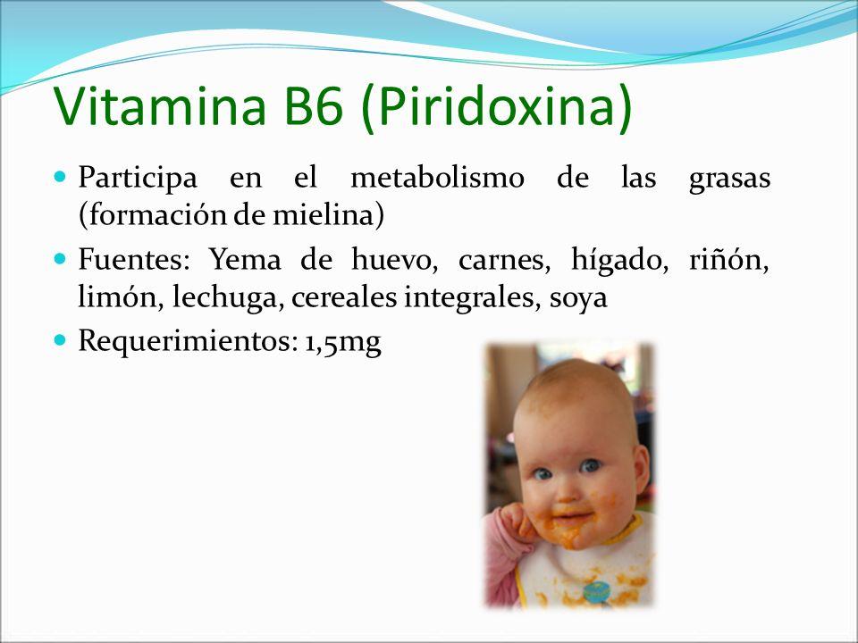 Vitamina B6 (Piridoxina) Participa en el metabolismo de las grasas (formación de mielina) Fuentes: Yema de huevo, carnes, hígado, riñón, limón, lechug