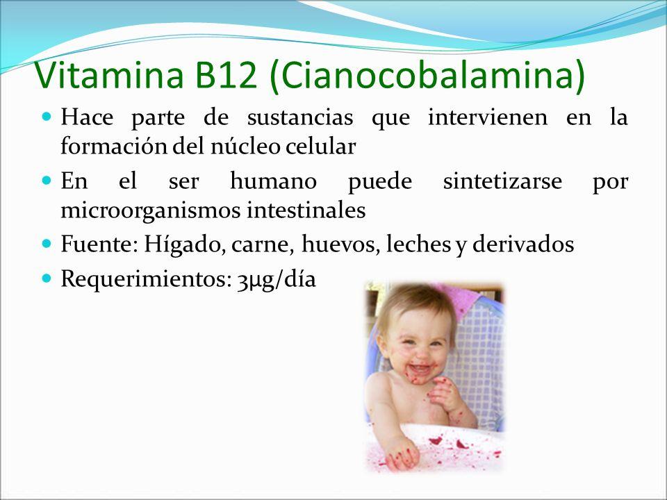 Vitamina B12 (Cianocobalamina) Hace parte de sustancias que intervienen en la formación del núcleo celular En el ser humano puede sintetizarse por mic