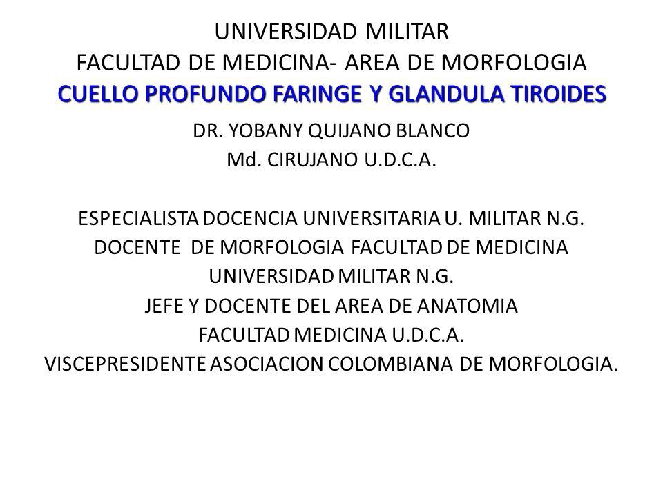 Faringe Fascia faringobasilar: – Porción basilar del occipital – Porción petrosa del temporal – Apófisis pterigoides