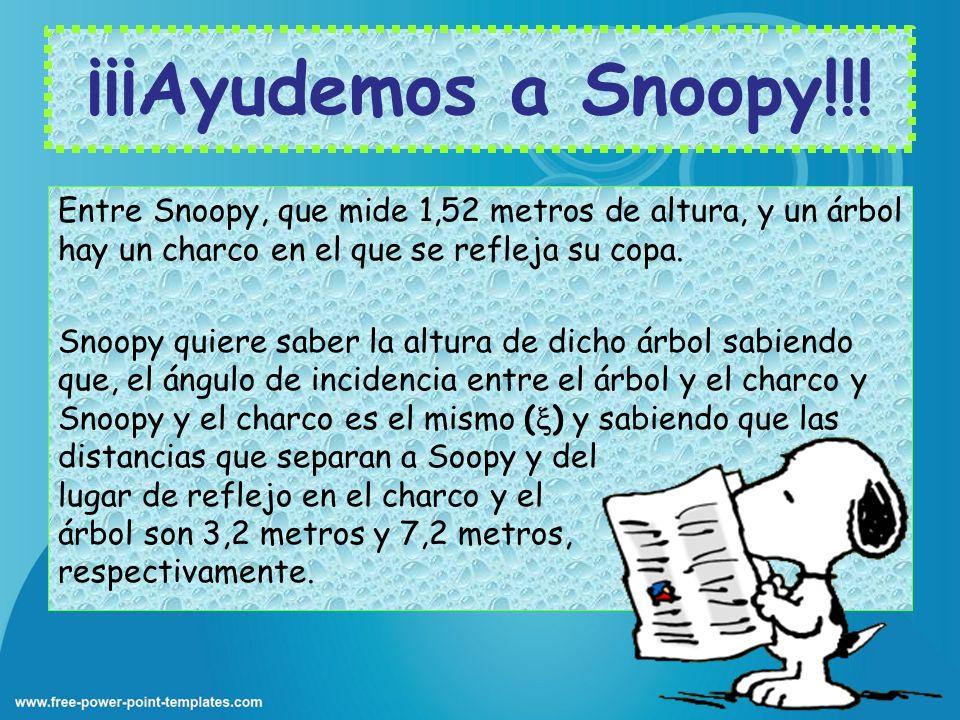 ¡¡¡Ayudemos a Snoopy!!! Entre Snoopy, que mide 1,52 metros de altura, y un árbol hay un charco en el que se refleja su copa. Snoopy quiere saber la al