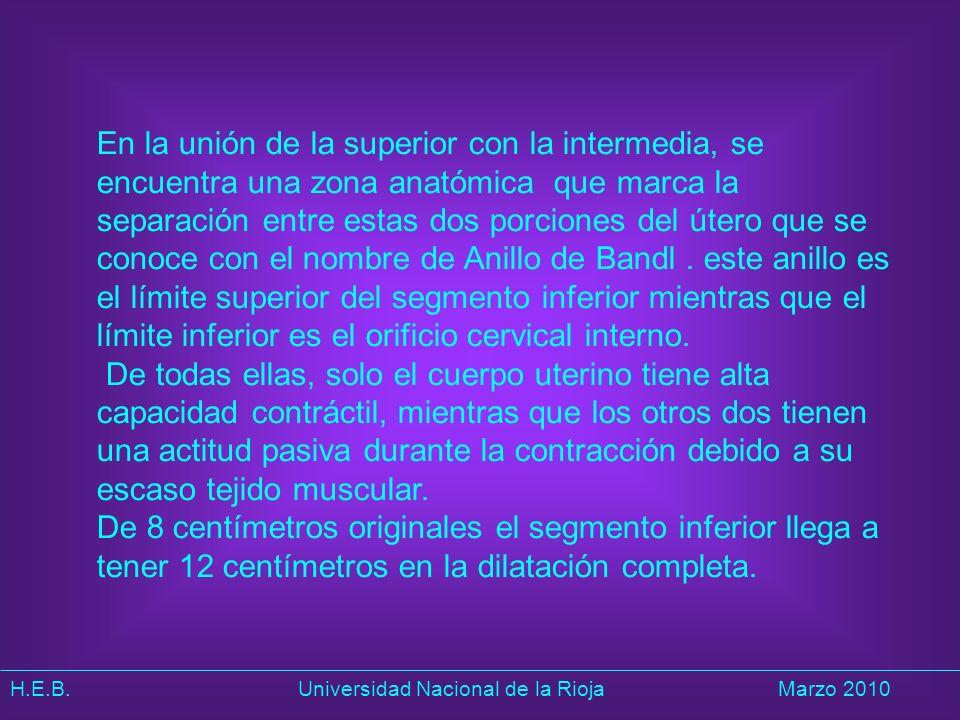 H.E.B. Universidad Nacional de la RiojaMarzo 2010 En la unión de la superior con la intermedia, se encuentra una zona anatómica que marca la separació