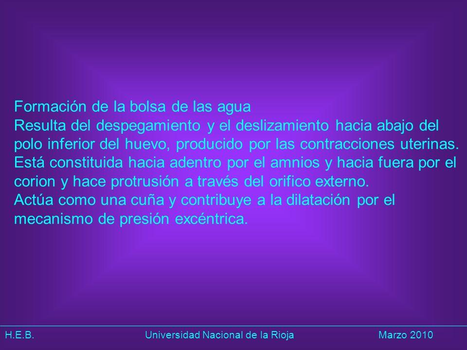 H.E.B. Universidad Nacional de la RiojaMarzo 2010 Formación de la bolsa de las agua Resulta del despegamiento y el deslizamiento hacia abajo del polo