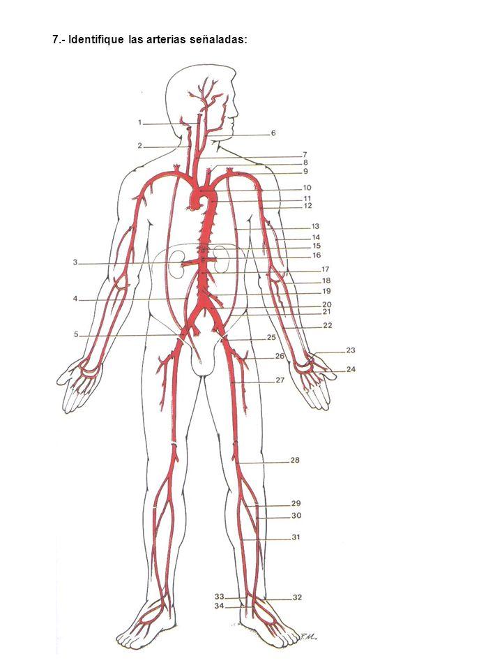 BIBLIOGRAFÍA: Gadner ORailly.Anatomía Humana. Netter.