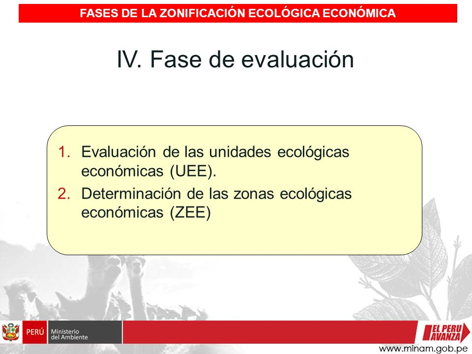 IV. Fase de evaluación 1.Evaluación de las unidades ecológicas económicas (UEE). 2.Determinación de las zonas ecológicas económicas (ZEE) FASES DE LA