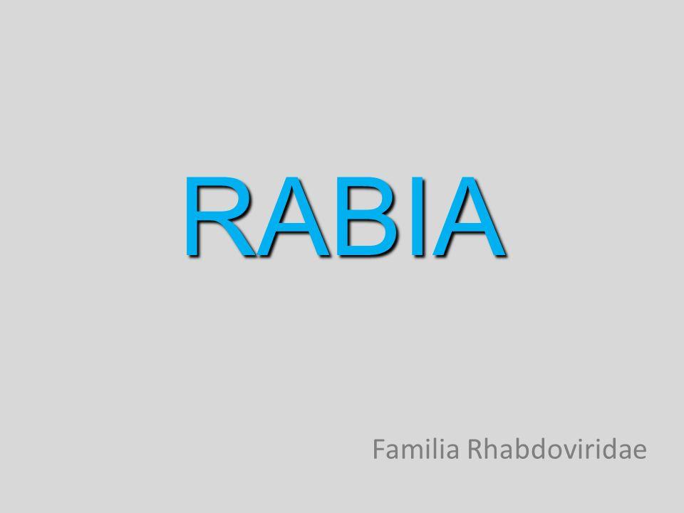 RABIA Familia Rhabdoviridae