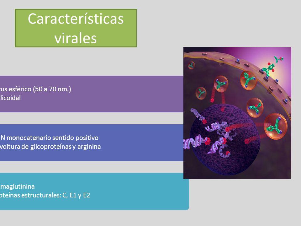 Características virales - Virus esférico (50 a 70 nm.) Helicoidal - ARN monocatenario sentido positivo Envoltura de glicoproteínas y arginina - Hemagl