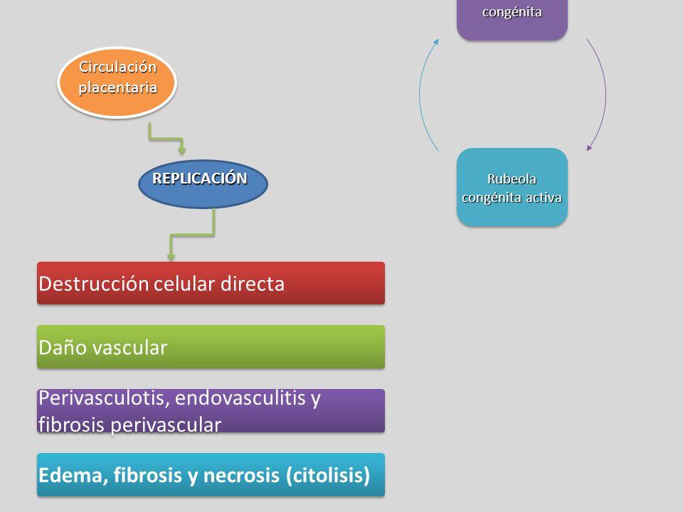 Circulación placentaria REPLICACIÓN Destrucción celular directa Daño vascular Perivasculotis, endovasculitis y fibrosis perivascular Edema, fibrosis y