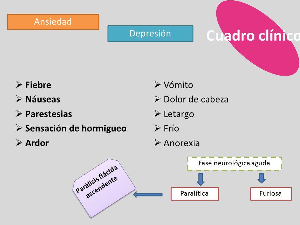 Circulación placentaria REPLICACIÓN Destrucción celular directa Daño vascular Perivasculotis, endovasculitis y fibrosis perivascular Edema, fibrosis y necrosis (citolisis) Rubéola congénita Rubeola congénita activa