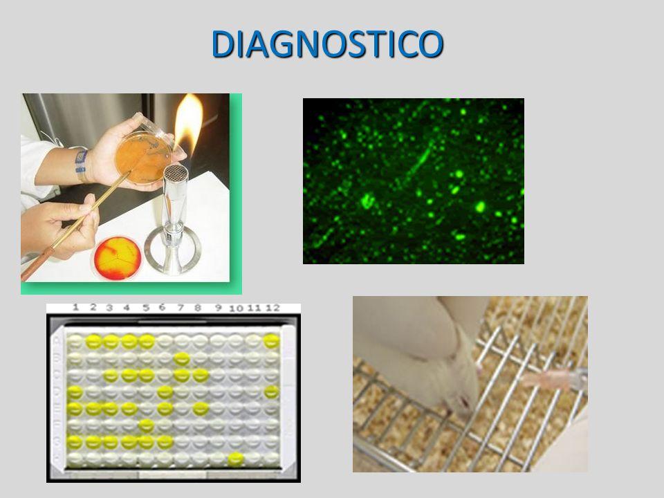 Diagnóstico Aislamiento viral de secreciones Cultivo de células Vero Hemaglutinación, Neutralización Inmunofluorescencia ELISA PCR
