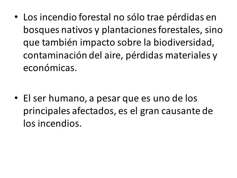 Los incendio forestal no sólo trae pérdidas en bosques nativos y plantaciones forestales, sino que también impacto sobre la biodiversidad, contaminaci