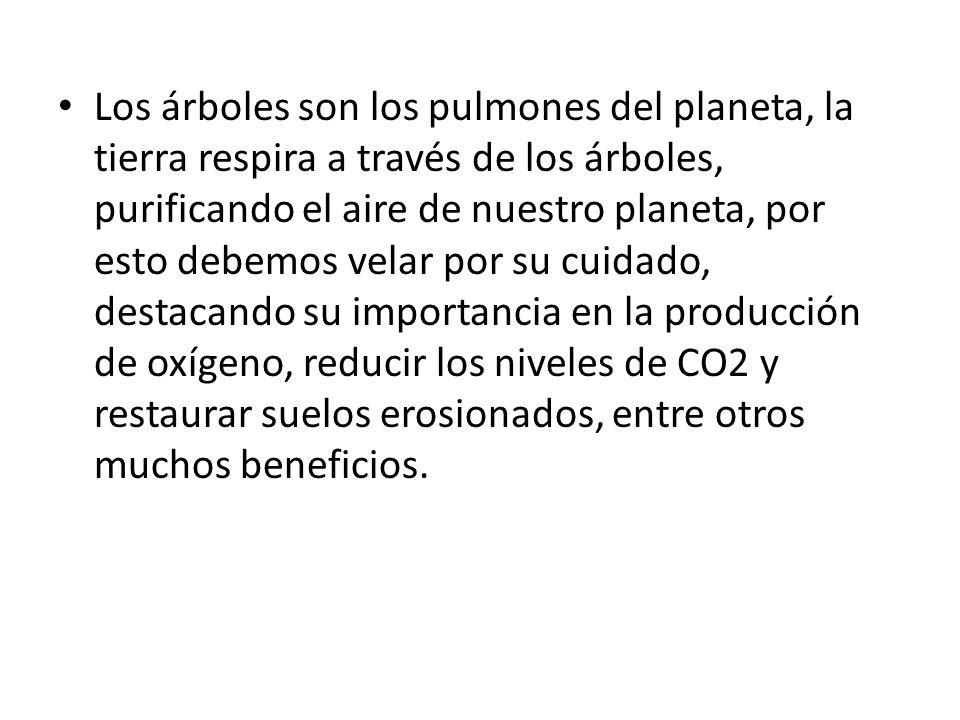 Los árboles son los pulmones del planeta, la tierra respira a través de los árboles, purificando el aire de nuestro planeta, por esto debemos velar po