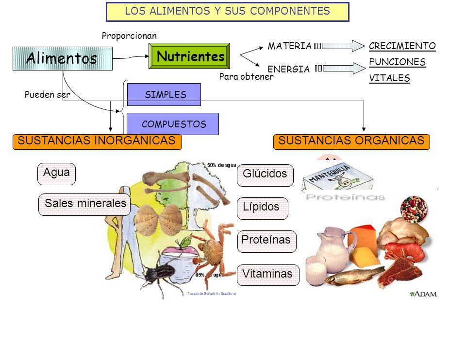 LOS ALIMENTOS Y SUS COMPONENTES Alimentos CRECIMIENTO FUNCIONES VITALES Nutrientes Proporcionan MATERIA ENERGIA Para obtener Pueden ser SIMPLESCOMPUES