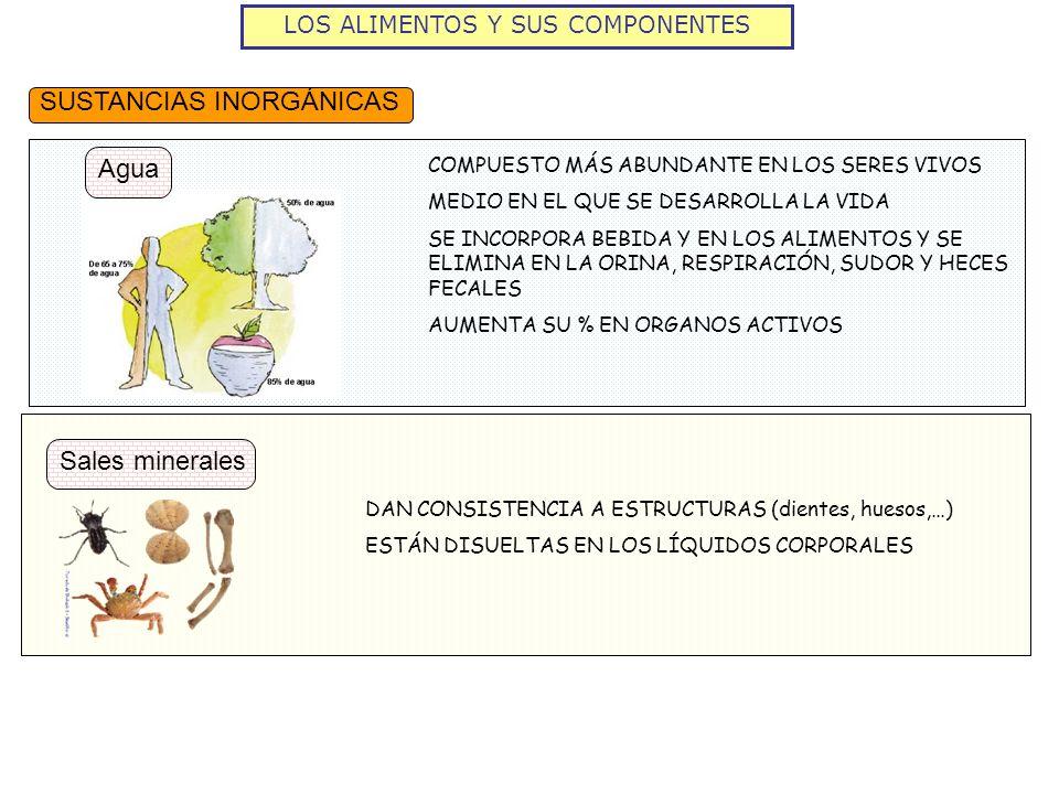 DAN CONSISTENCIA A ESTRUCTURAS (dientes, huesos,…) ESTÁN DISUELTAS EN LOS LÍQUIDOS CORPORALES COMPUESTO MÁS ABUNDANTE EN LOS SERES VIVOS MEDIO EN EL Q