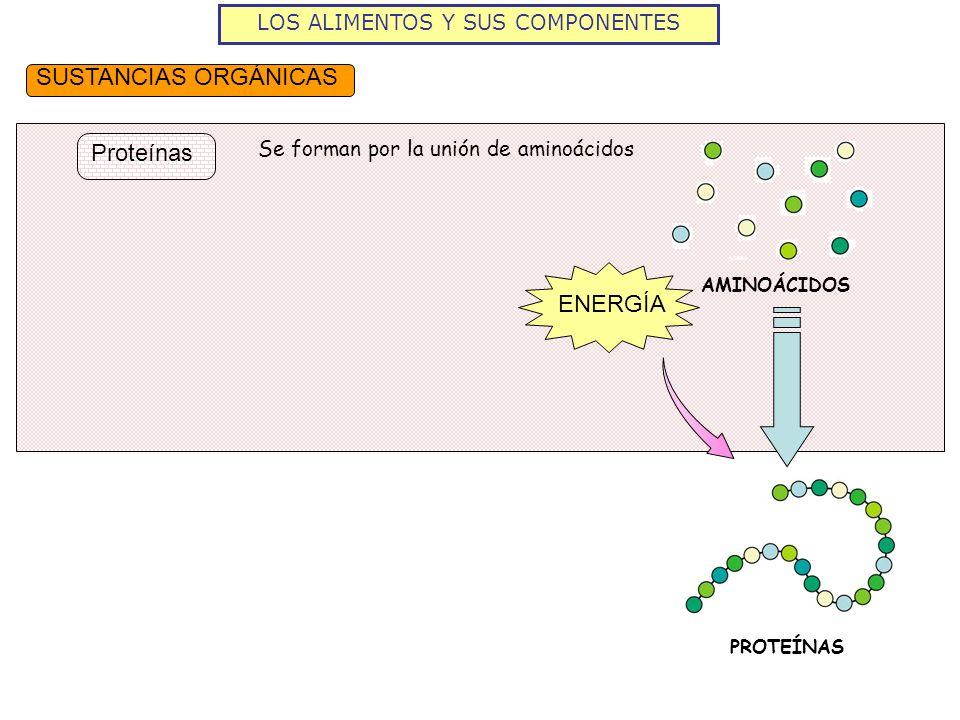 LOS ALIMENTOS Y SUS COMPONENTES SUSTANCIAS ORGÁNICAS Proteínas Se forman por la unión de aminoácidos AMINOÁCIDOS ENERGÍA PROTEÍNAS