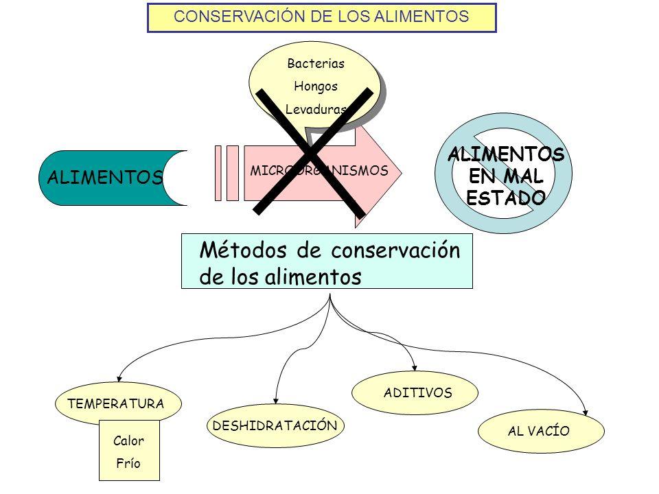 CONSERVACIÓN DE LOS ALIMENTOS Métodos de conservación de los alimentos ALIMENTOS ALIMENTOS EN MAL ESTADO MICROORGANISMOS Bacterias Hongos Levaduras DE