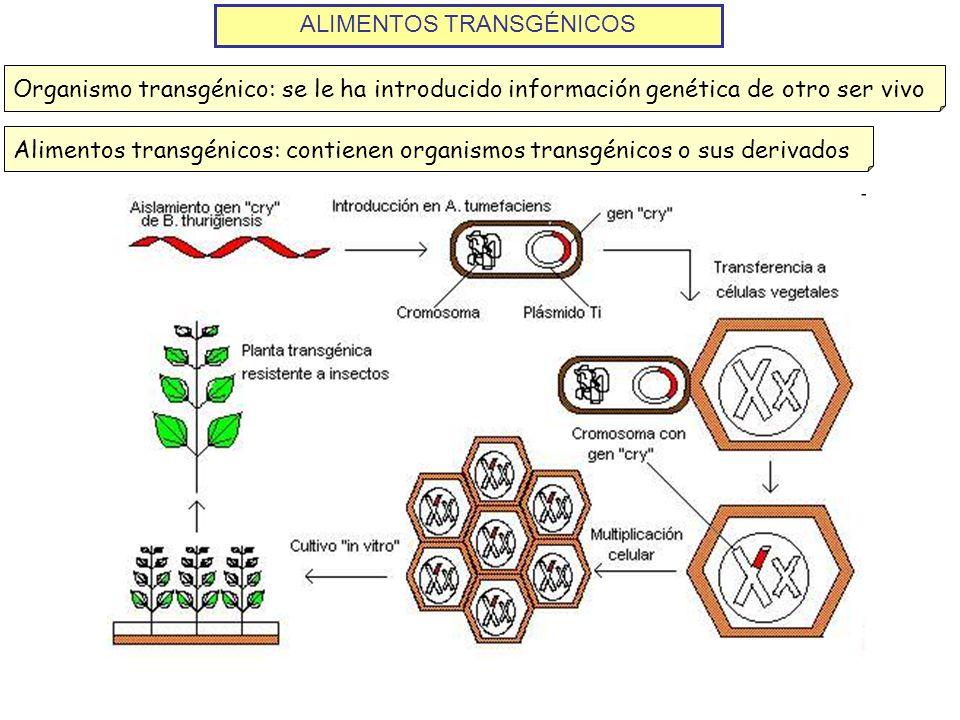 ALIMENTOS TRANSGÉNICOS Organismo transgénico: se le ha introducido información genética de otro ser vivoAlimentos transgénicos: contienen organismos t