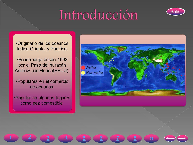 Originario de los océanos Indico Oriental y Pacífico. Se introdujo desde 1992 por el Paso del huracán Andrew por Florida(EEUU). Populares en el comerc