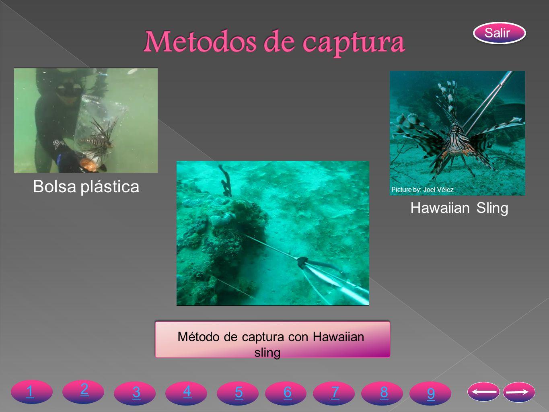 Picture by: Joel Vélez Método de captura con Hawaiian sling Bolsa plástica Hawaiian Sling 4 36578 1 2 9 Salir