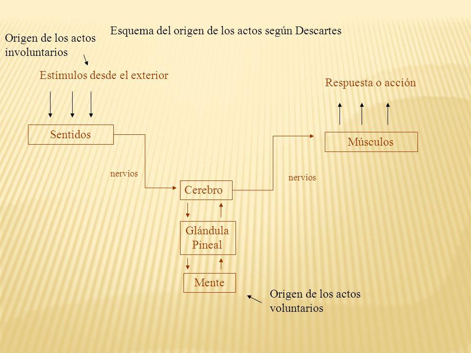 Esquema del origen de los actos según Descartes Estímulos desde el exterior Sentidos Cerebro Glándula Pineal Mente Músculos Respuesta o acción nervios